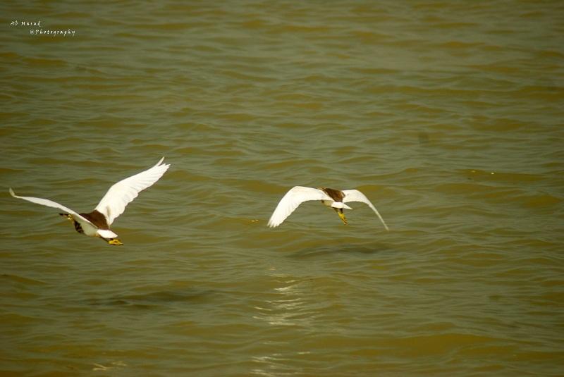Birds in Astagram Kishorganj