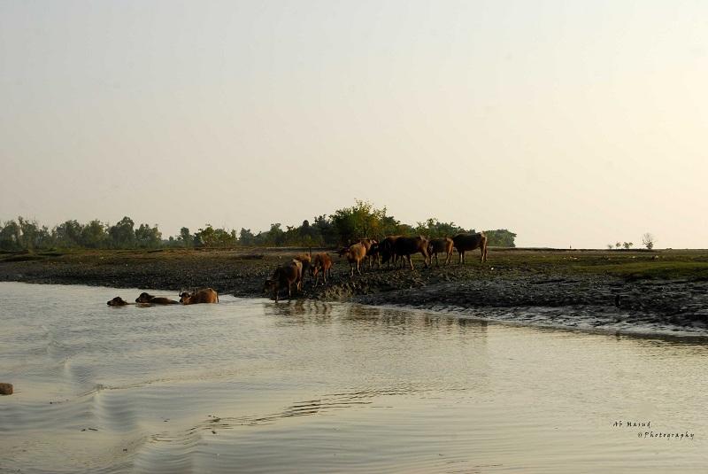 Nijhum Island